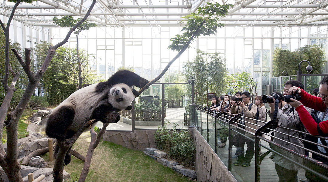 Everland Panda World, as Natural a Habitate as Possible